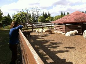 Marlene contemplando sus ovejas. Foto Marisela Valero