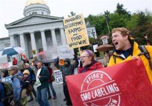 Los ecologistas advierten sobre los riesgos de transgénicos de Monsanto