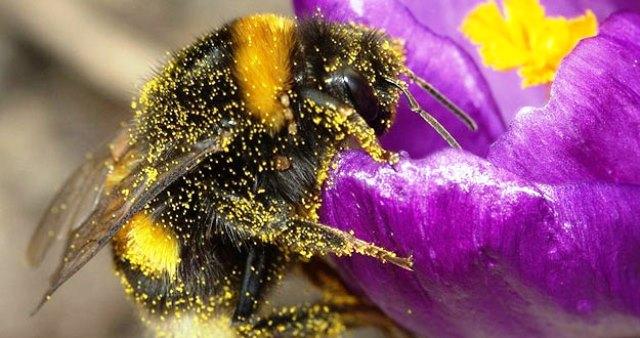 Facilidad para las abejas y su traslado