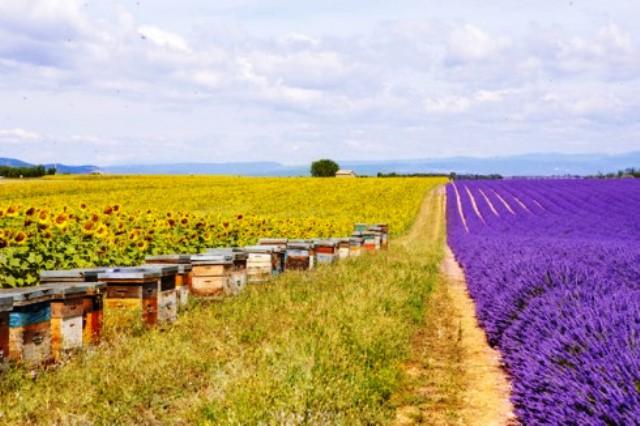 Autopista de abejas en Oslo. Foto Ecoportal.net
