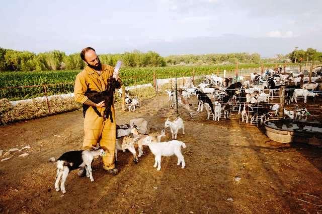 Los prisioneros con un comportamiento ejemplar pueden candidatearse para trabajar en las tareas agrícolas y pecuaria