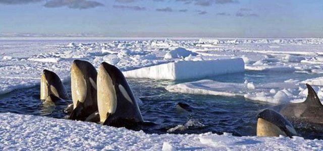 Zona protectora para la Antártida