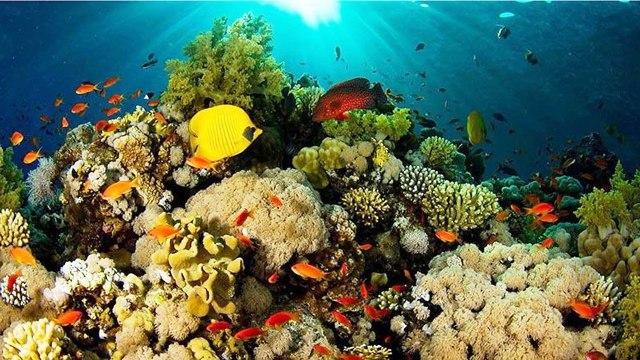 1-corales-japon