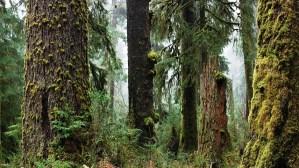 Recuperación de los bosques