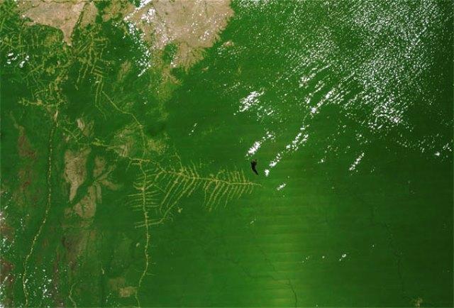Espectroradiometría de la NASA sobre impacto de agricultura en los bosques