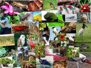 Diversidad-Biológica