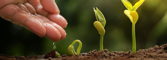 Cada quien es responsable de preservar y honrar la naturaleza