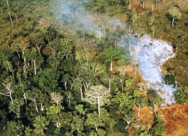Deforestación en Costa de Marfil