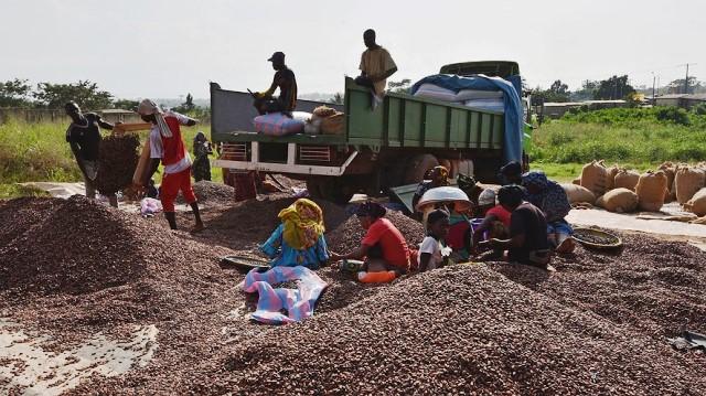 Trabajadores en un centro de clasificación de cacao en Costa de Marfil