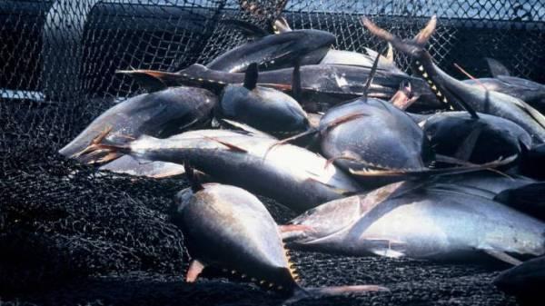 La pesca ilegal acaba con las especies del mar