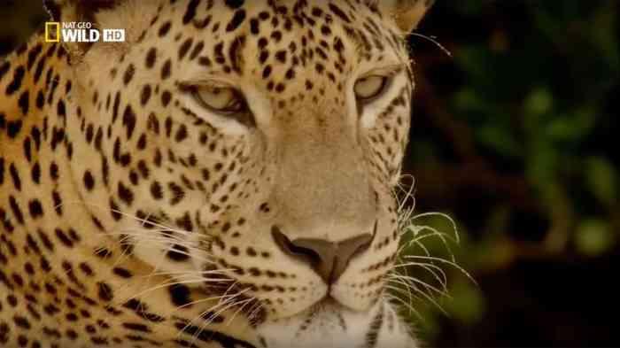 Wild Sri Lanka - Land of Lakes. National Geographic Wild naturprogram fra 2015 (HD)