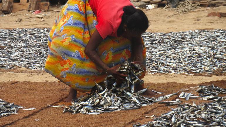 Fiskemarkedet i Negombo