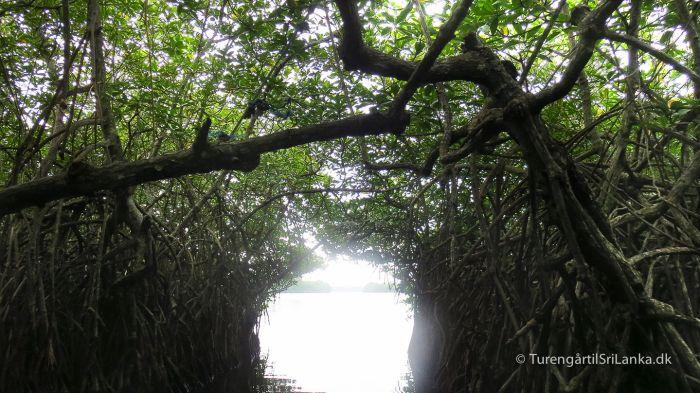 Mangroveskoven i Madu River