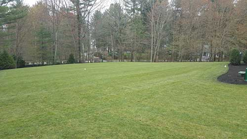 portfolio image of commercial residential sod installation in Concord MA