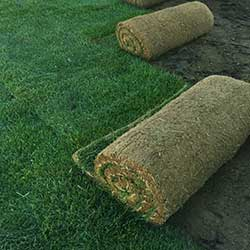 contact us for more information about sod sales or installation
