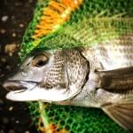 釣り釣り釣りの釣り三昧。釣りにかかわる1週間。へちこがねにフィッシングショーに新年会に雨の中テトラ前打ち修行 in 全て大阪湾奥(笑)