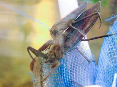 フライフィッシングで要になる水生昆虫のハッチの種類って何種類あるの!?