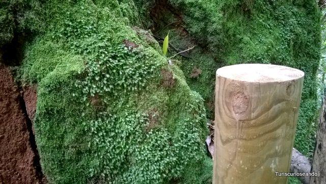 4 lugares para escuchar La Palma