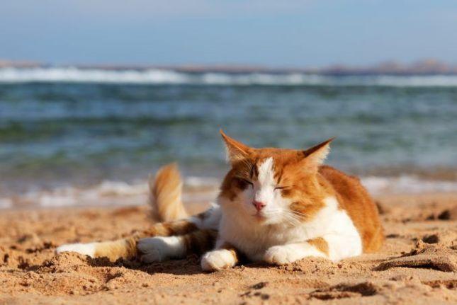 Consejos para tener un feliz viaje con tu gato