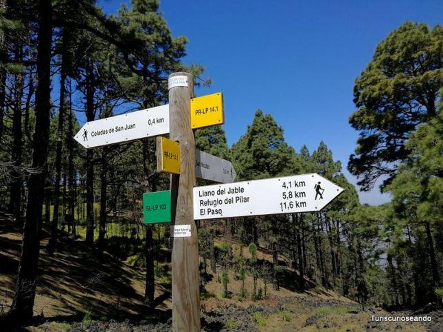 La Palma: coladas de San Juan y el Corazoncillo en flor