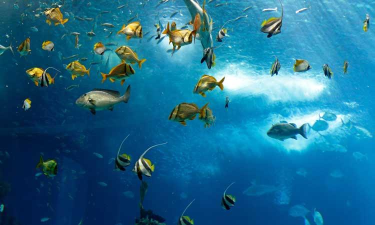 oceanario vale a pena visitar em lisboa