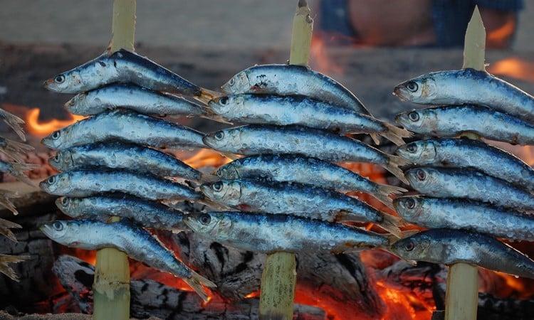 marbella espanha peixes