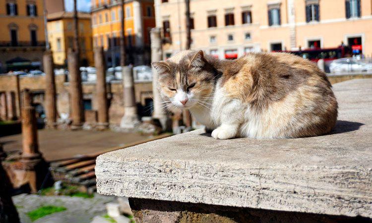 santuario dos gatos, segredos de roma