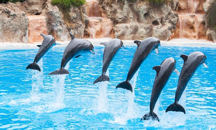 nadar com golfinhos no zoomarine algarve