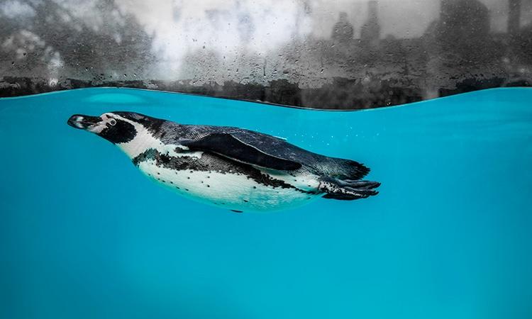 visitar o sea life london aquarium