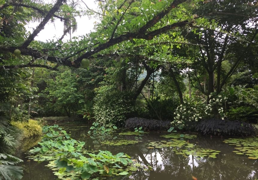 Sítio Burle Marx: lago na entrada do complexo.
