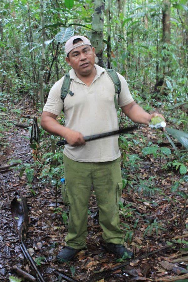 Cruzeiro na Amazônia: caminhada na selva.
