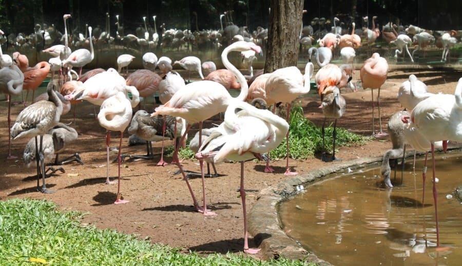 O O Parque das Aves possui um viveiro de flamingos.