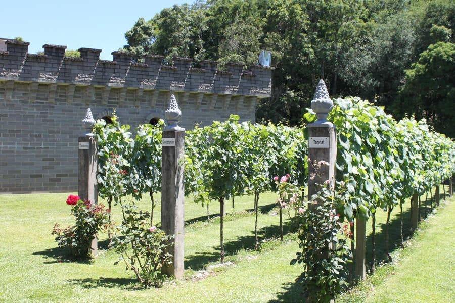 Parreirais demostrativos da vinícola Cave de Pedra em Bento Gonçalves.
