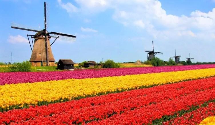 5 dias na Holanda