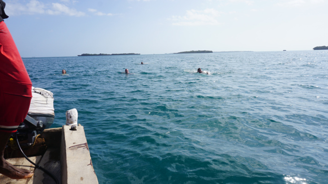 Blue Safari - swim