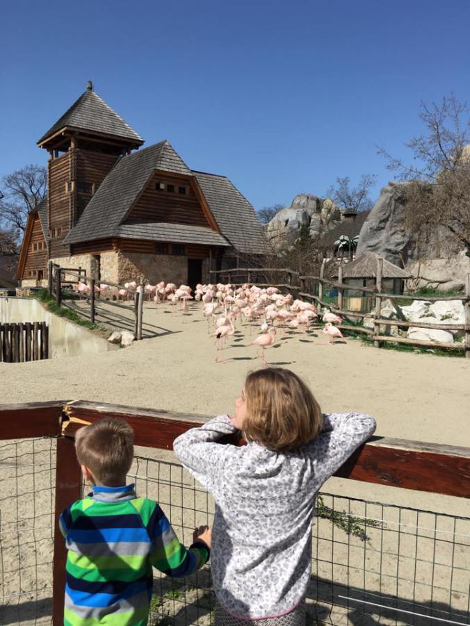 Budapesta - zoo