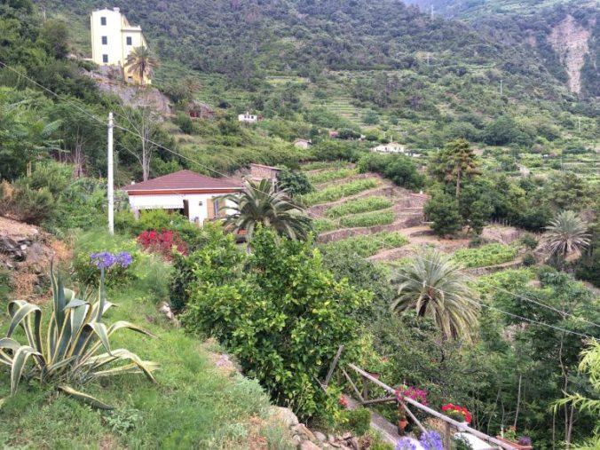 Cinque Terre - corniglia view