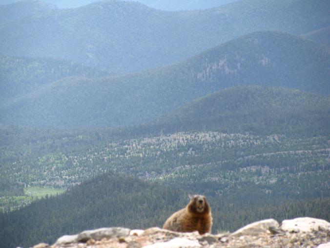 Denver - mount evans1