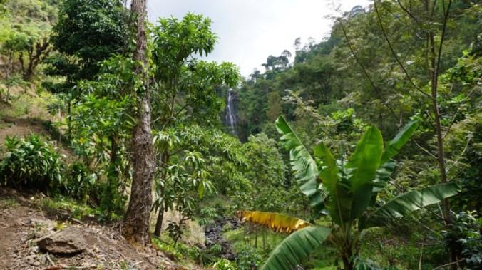 Kilimanjaro - tropical forest