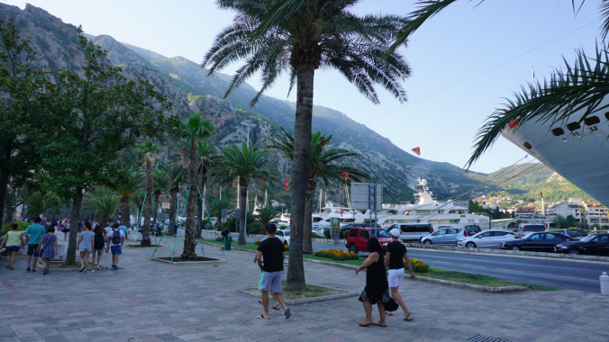 Kotor - palm trees