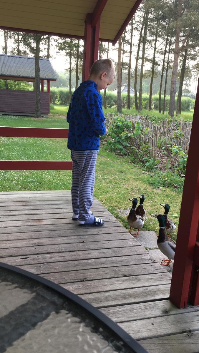 Legoland Danemarca - village ducks
