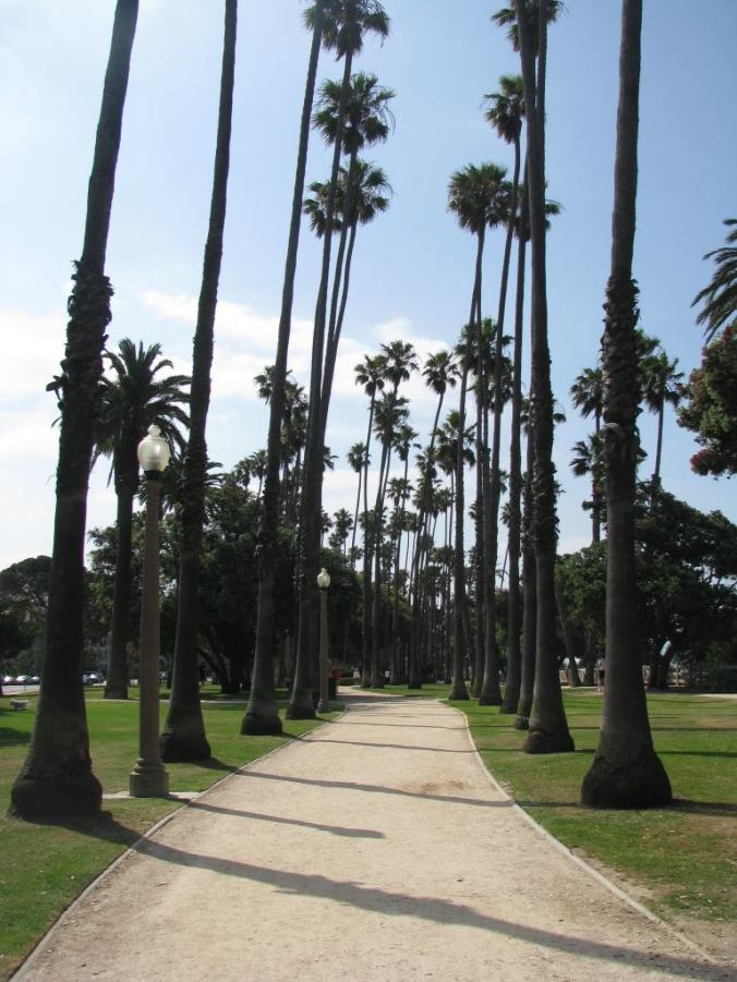 Los Angeles - beverly hills palm trees