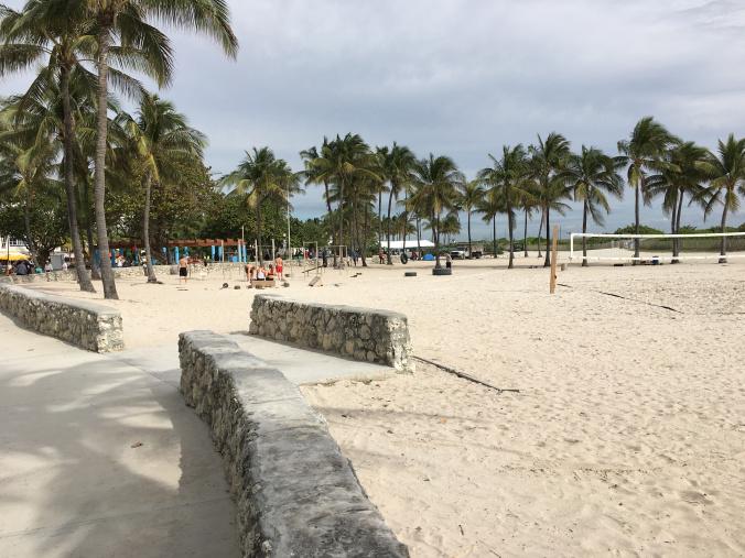 Miami - beach palm trees