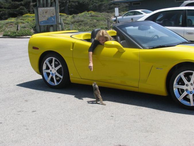 Monterey - 17 mile drive veverita