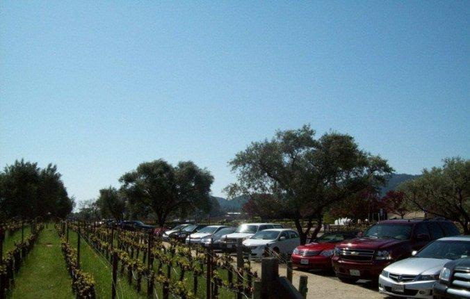 Napa Valley - robert moldavi winery parking