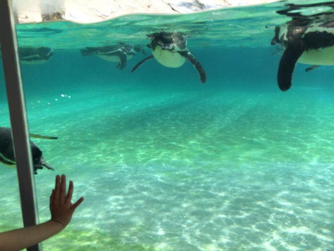 Nyiregyhaza Zoo - pinguins