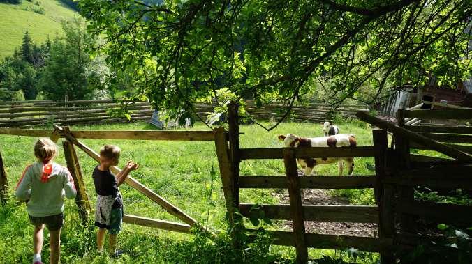 Pestera Ursilor si Scarisoara - cows