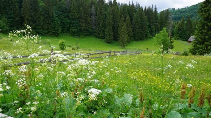 Pestera Ursilor si Scarisoara - field