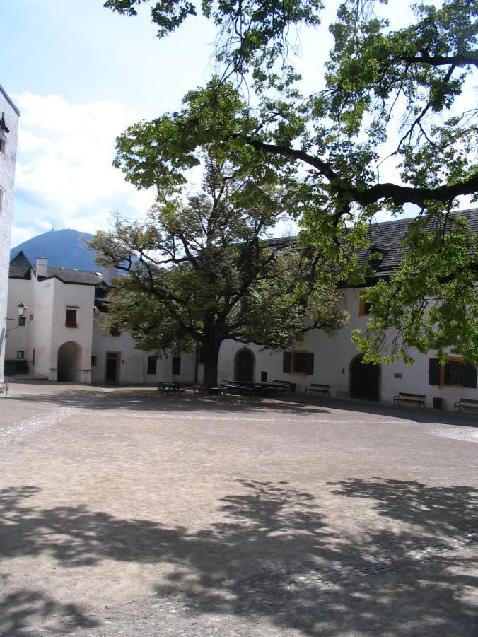 Salzburg - tree