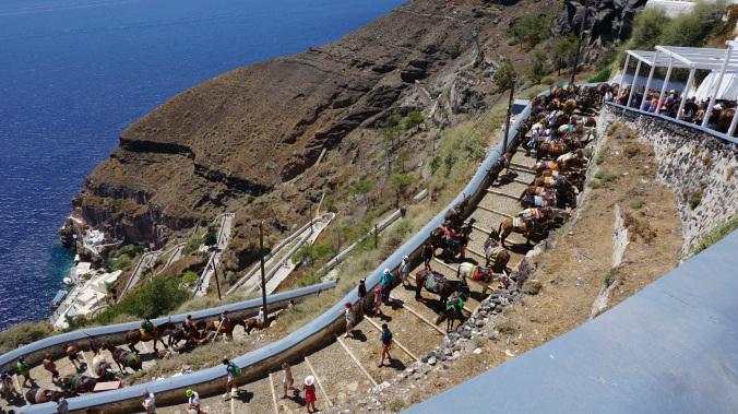 Santorini - fira donkeys1